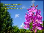 TJM-12JUL2020.jpg